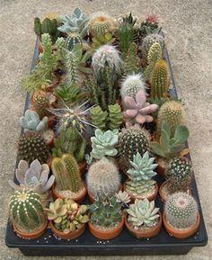 Cacti Crate